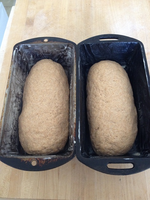 Loaves ready for the final rise