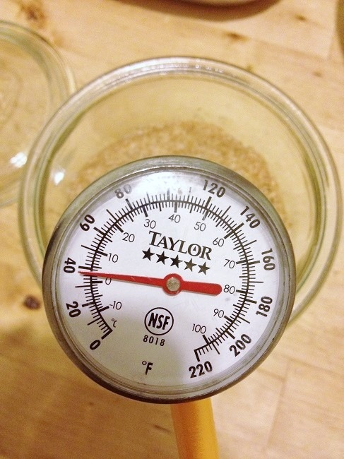 The instant thermometer, inserted into the starter, reads only 38