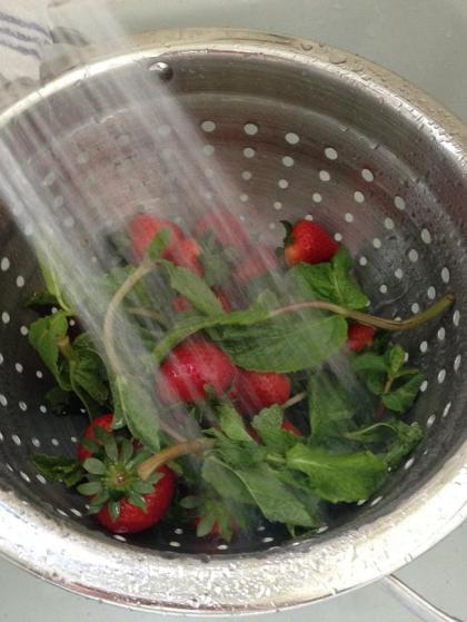 Rinse the berries and herbs under a gentle stream of water