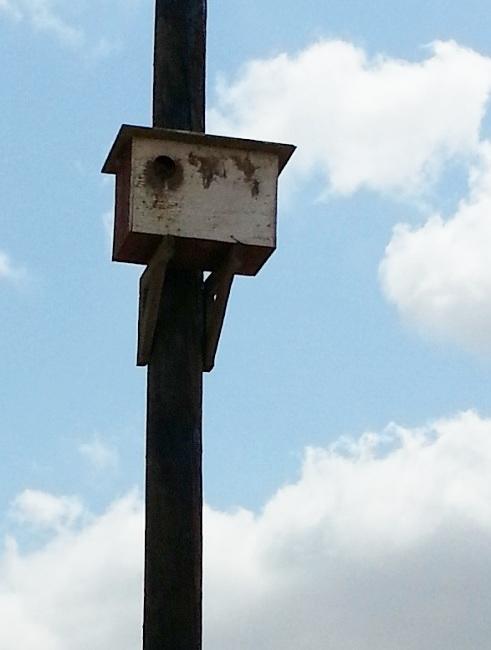 A raptor nesting box on a power pole