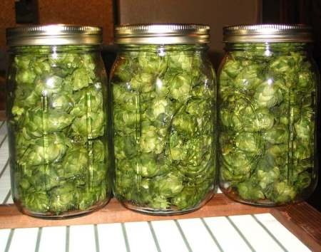 Home-canned Brussels sprouts - A morgueFile Free photo