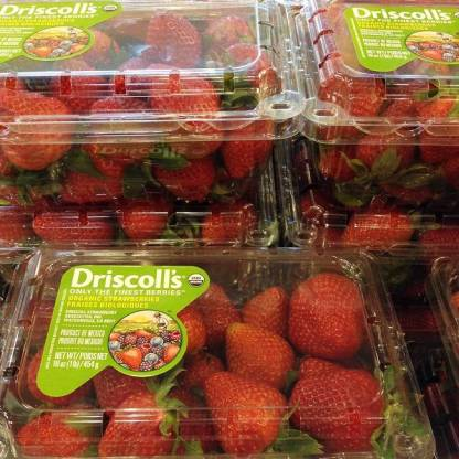 Organic strawberries come encased in plastic clam shells that often have moldy, rotten berries buried in the middle
