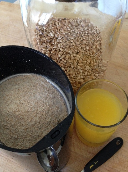 Freshly ground flour in coffee mill, with wheat berries, orange juice and measuring spoon