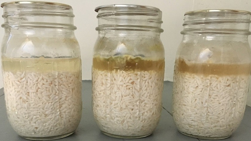 Day 30: Nearly clear water in first jar, dark brown with penetrating mold in second, and slightly lighter brown with slightly less penetrating mold in third; rice appears normal in all three jars;