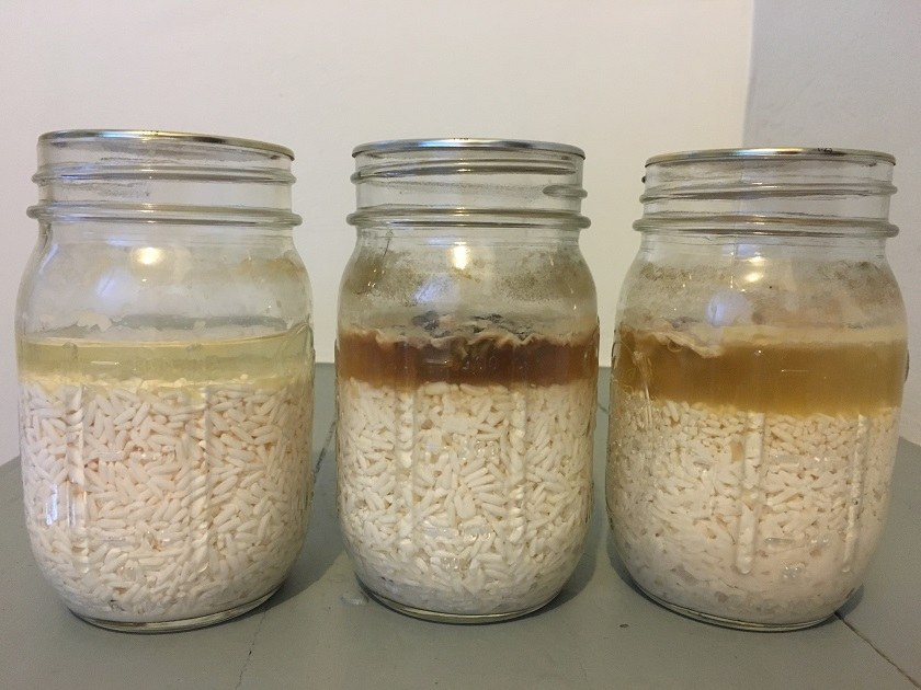 The same 3 jars of rice and water on February 27--the rice and water have a pinkish cast and are getting a little mushy on the bottom, especially the third jar on the right