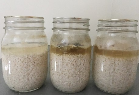 3 jars of rice and water from the January experiment, each at different stages of fermentation and/or rot on February 2