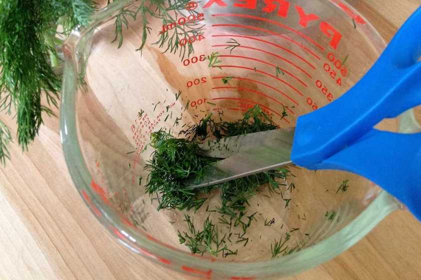 Snipping dill
