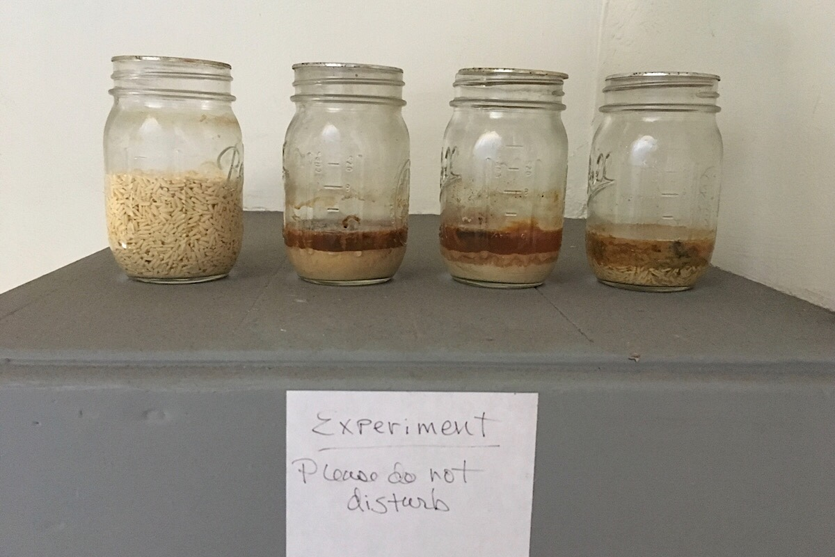 Love and 4 jars of rice and water: Experiment #4